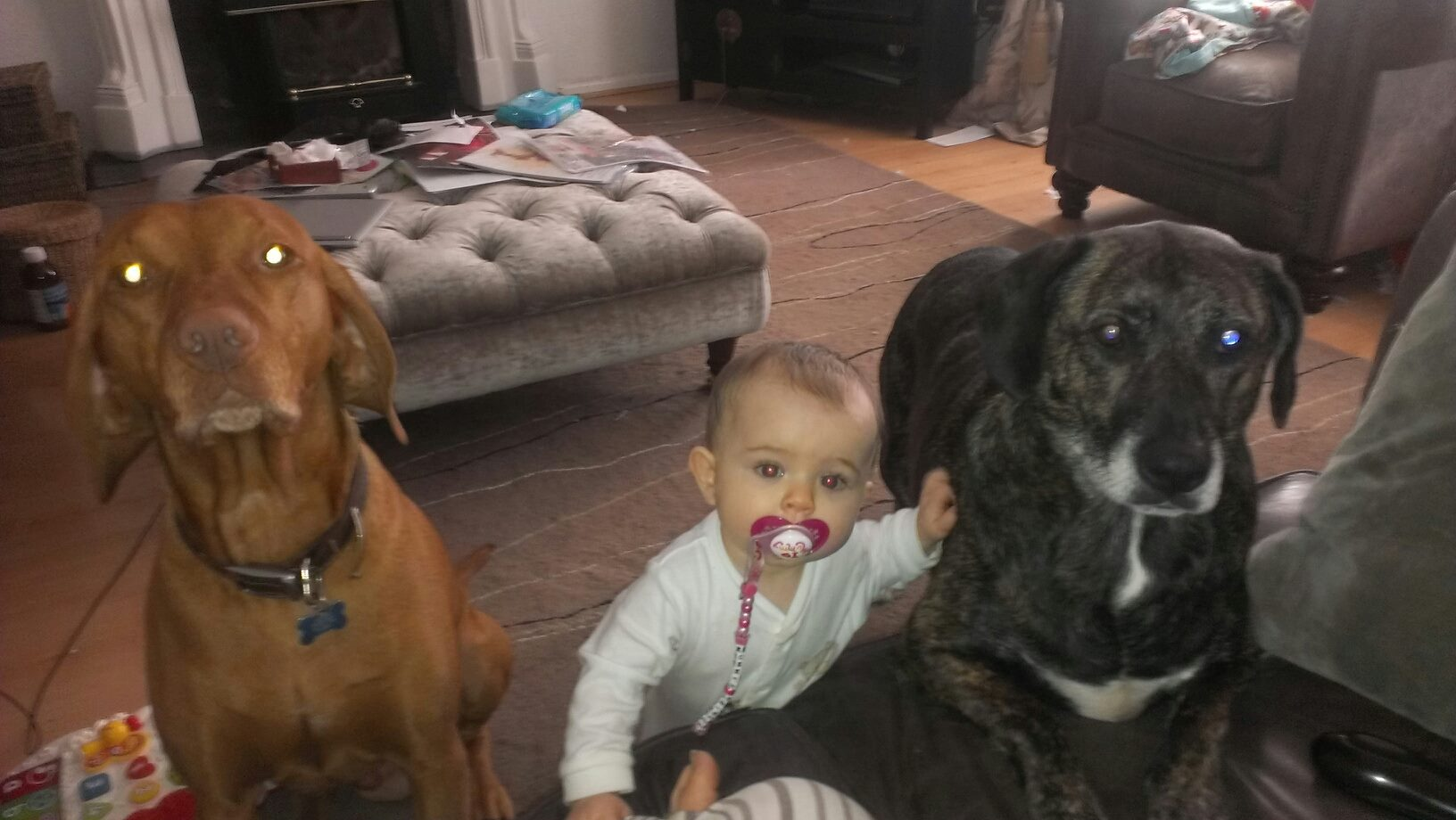 My 3 monsters